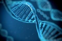 178352-376x250-genetic-factors